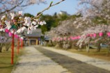 【春うらら】